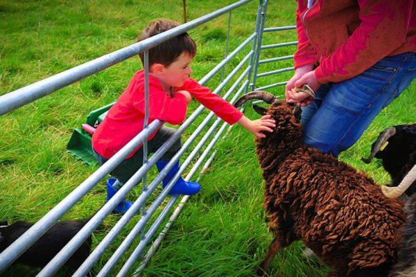 child-petting-sheep