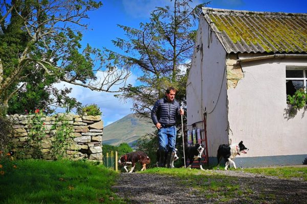 sheepdog-training-boarding (1)