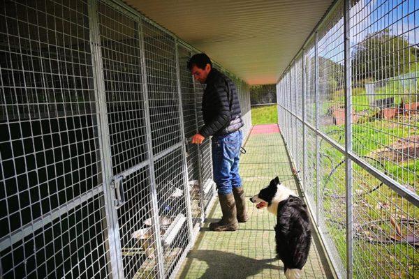sheepdog-training-boarding (2)
